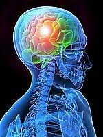 Pohled na nervový systém